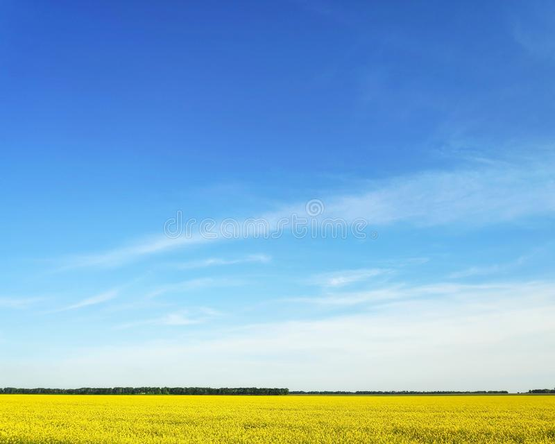 zielona ?r?dpolna trawa przeciw zmierzchowi i niebieskiemu niebu obrazy stock