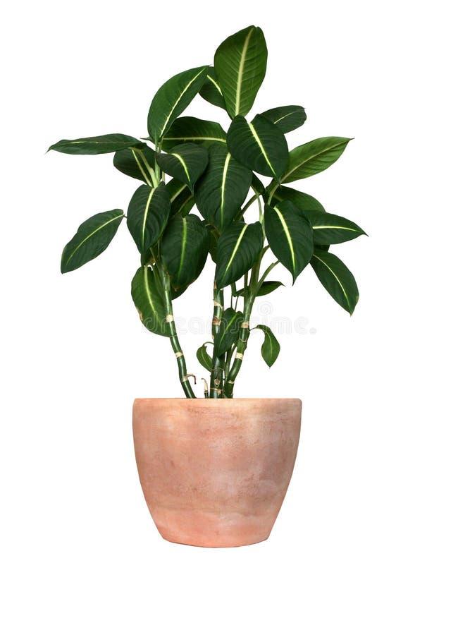 zielona roślina zdjęcia stock
