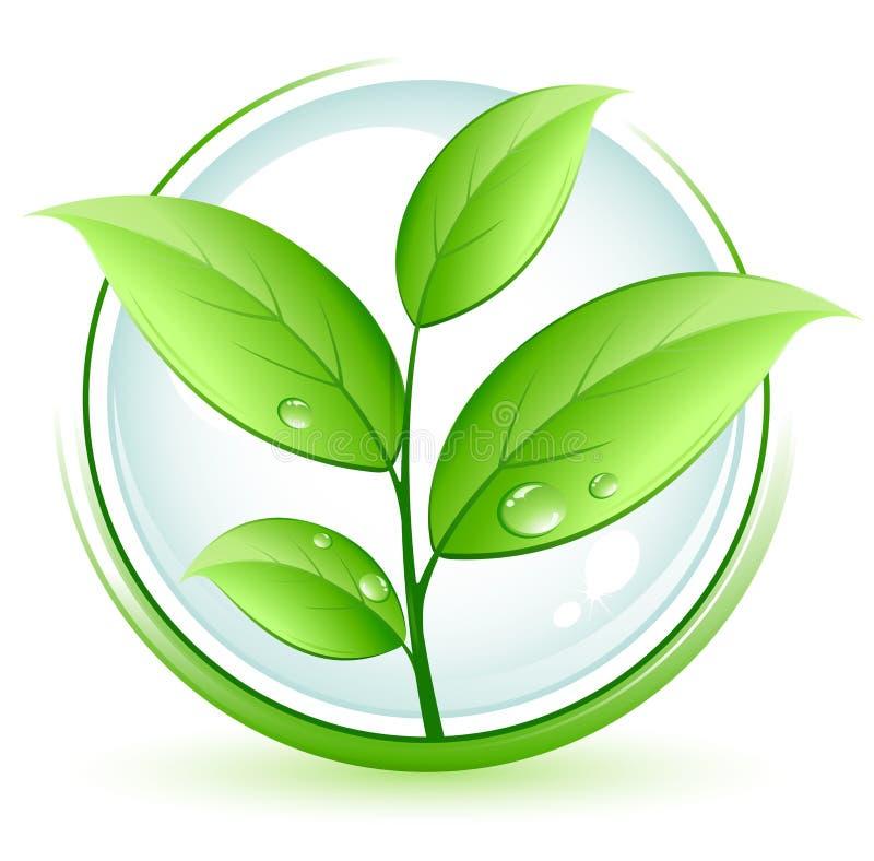 zielona roślina ilustracja wektor
