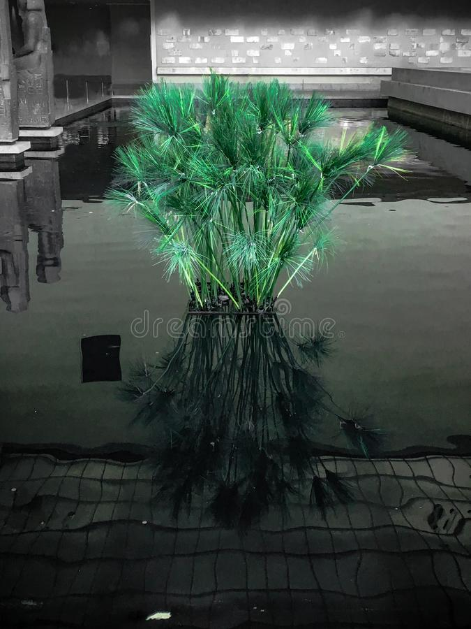 Zielona roślina kiełkuje od basenu obraz stock