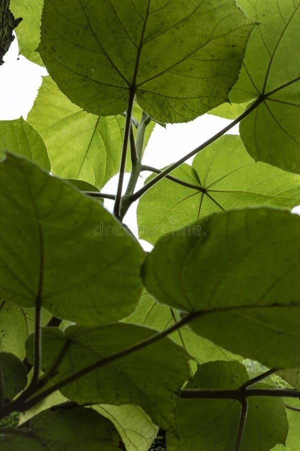 Zielona roślina na grzbiecie liści plusk chlorofilu obraz stock