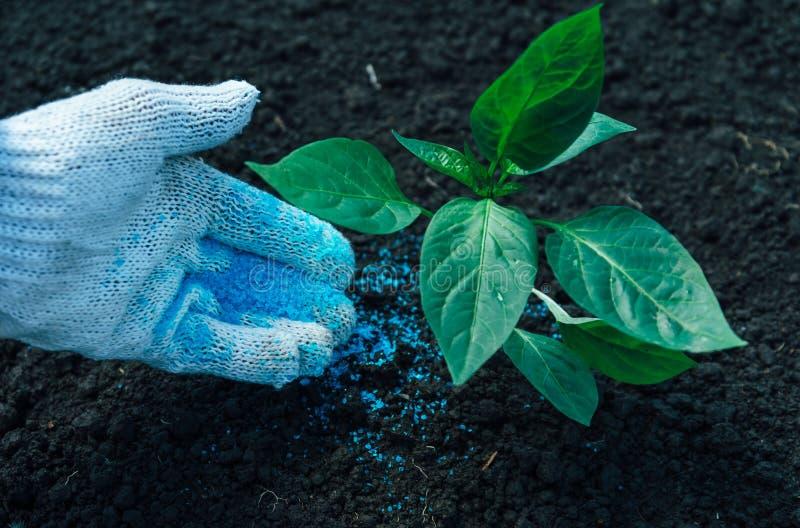 Zielona roślina na ziemi zdjęcia royalty free