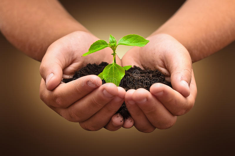 Zielona roślina w dziecka rękach obrazy royalty free