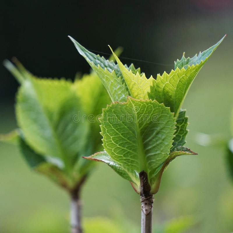 Zielona roślina w jesieni fotografia royalty free