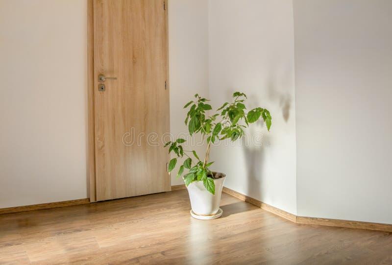 Zielona roślina w pustym pokoju fotografia stock