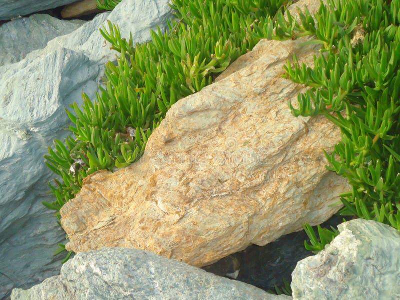 Zielona roślina w skale zdjęcia royalty free