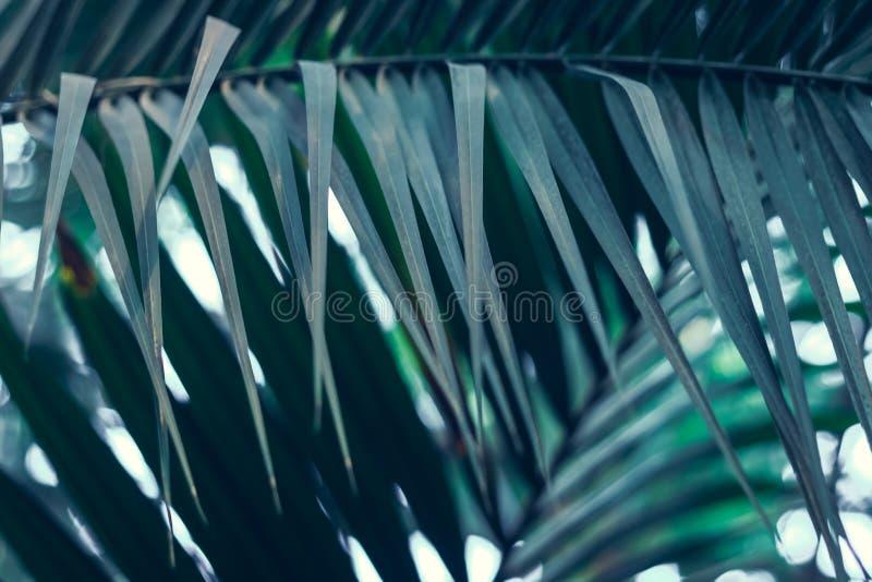 Zielona roślina z palmowymi liśćmi r w lasowej naturze obraz stock