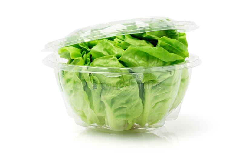 Zielona Świeża sałata zdjęcia stock