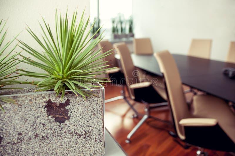 Zielona spiky roślina w pustym biurze, sala konferencyjna obraz stock