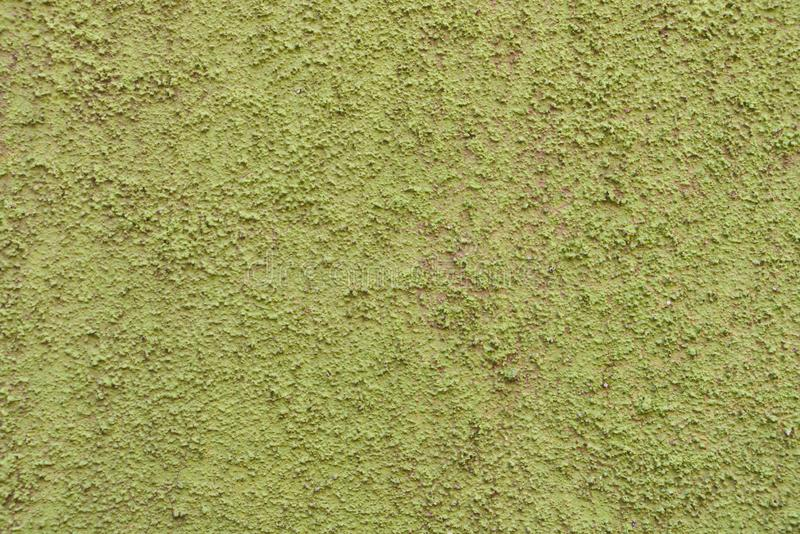 Zielona stiuk ściana zdjęcie stock