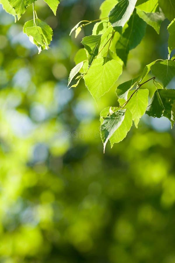 zielona tła natury zdjęcia stock