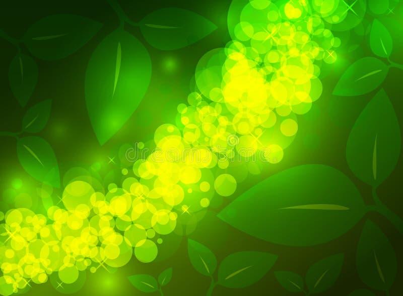 Zielona tło dżungla