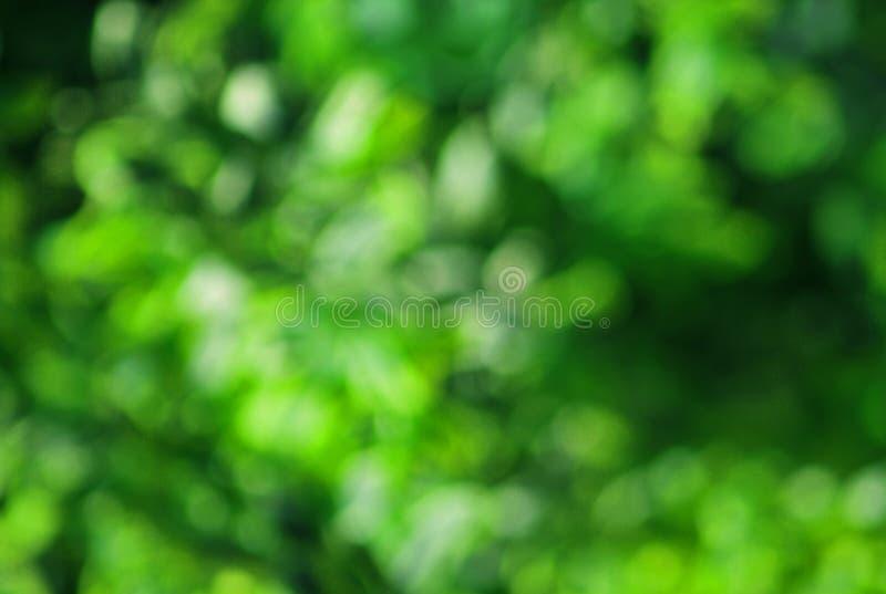 zielona tło natura obraz stock