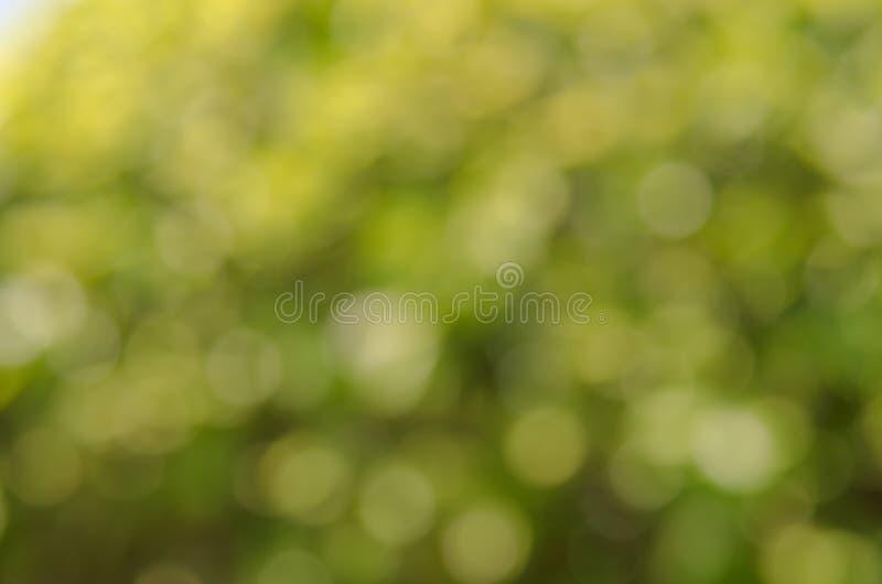 zielona t?a natury fotografia royalty free