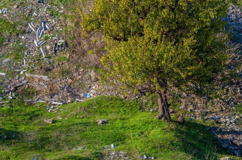 zielona tekstura, światło słoneczne na zdjęcia royalty free