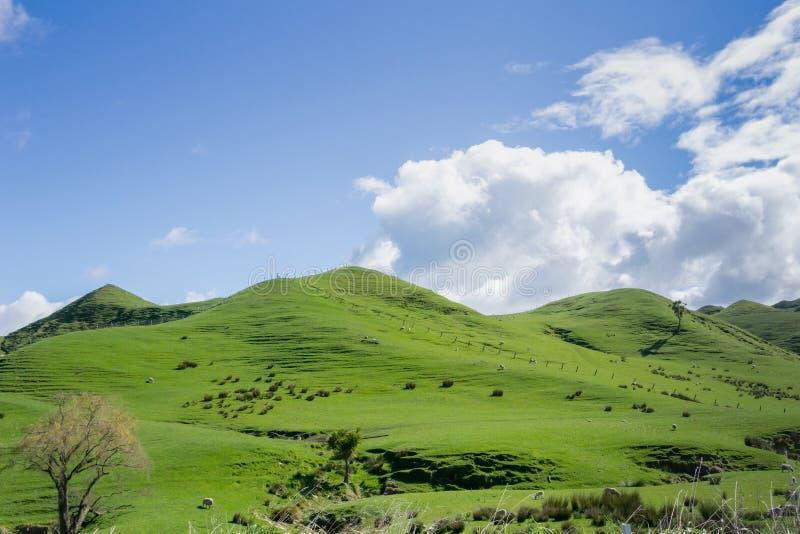 Zielona toczna ziemia uprawna obrazy stock