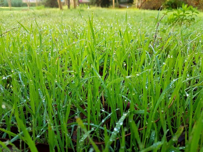 Zielona trawa obrazy royalty free