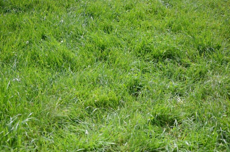 zielona trawa 1 zdjęcie stock