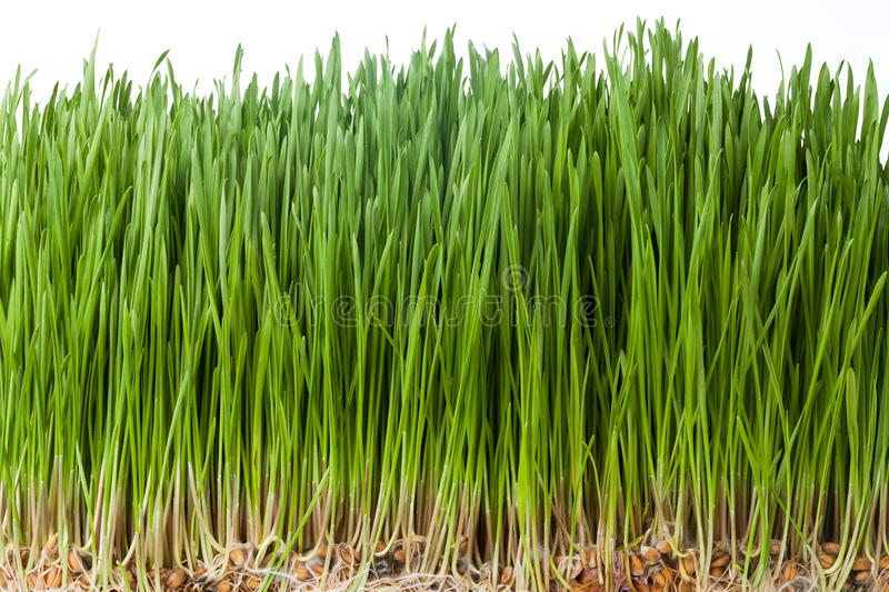 Download Zielona trawa obraz stock. Obraz złożonej z wiosna, lato - 65226491