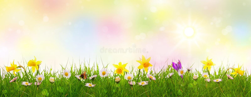 Zielona trawa i kolorowi wiosna kwiaty fotografia royalty free