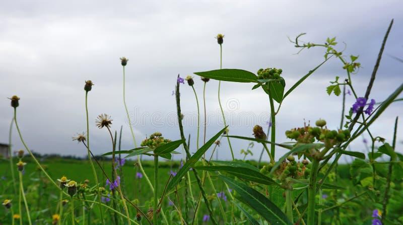 Zielona trawa i kwiaty kwitniemy z niebieskiego nieba tłem fotografia stock