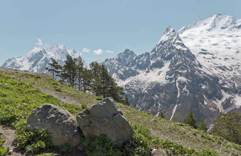 Zielona trawa i nakrywający szczyty w Dombai zdjęcia royalty free