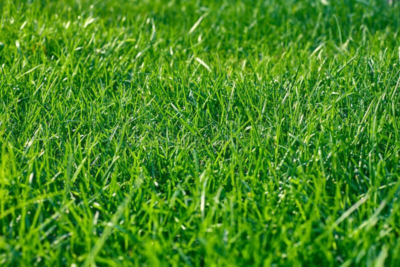 Zielona trawa Lata tło obrazy royalty free