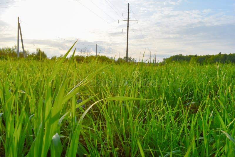 Zielona trawa na śródpolnym zakończeniu w górę zdjęcie royalty free
