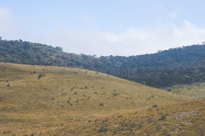 zielona trawa na górach zdjęcie royalty free