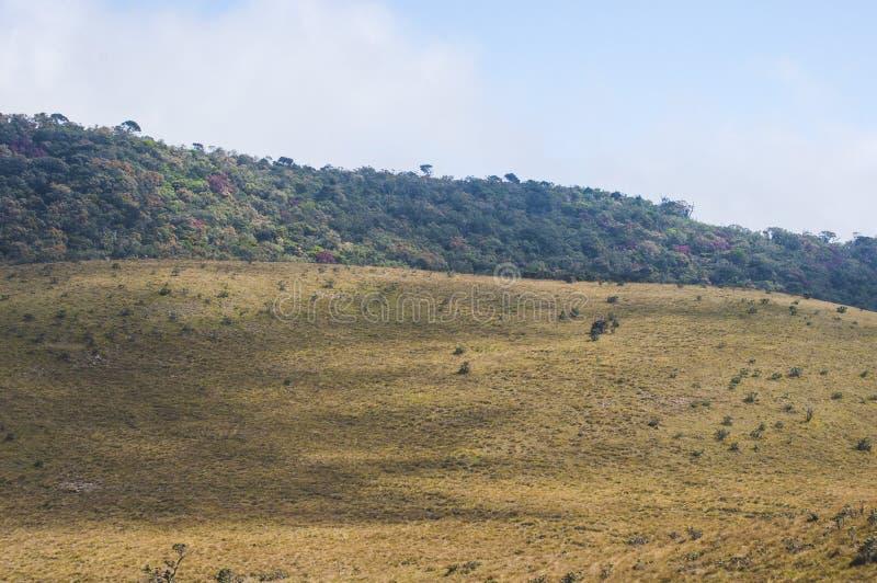 zielona trawa na górach obrazy stock