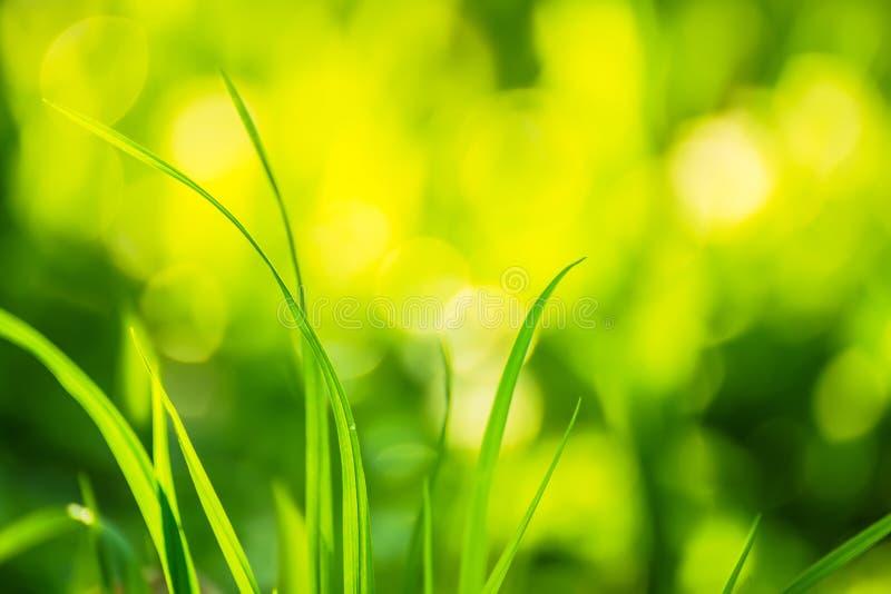 Zielona trawa na jaskrawym pogodnym naturalnym zielonym tle zdjęcia royalty free