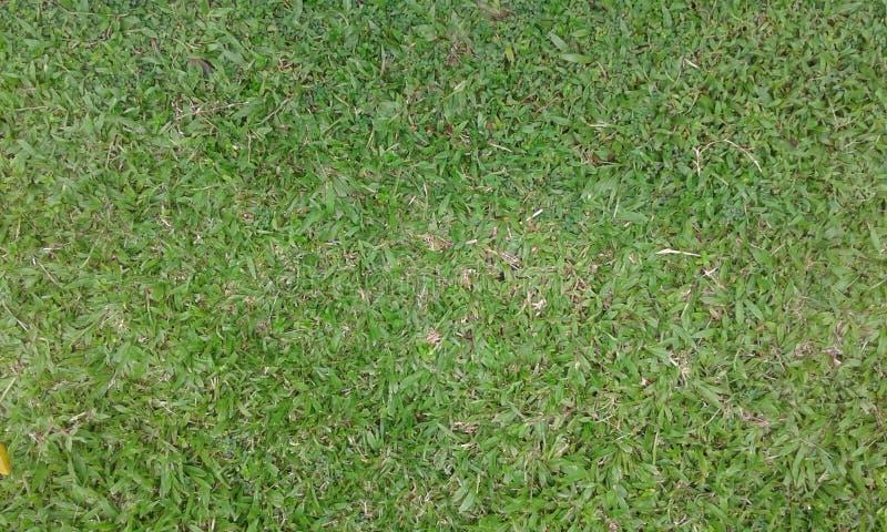 Zielona trawa na polu zdjęcia royalty free