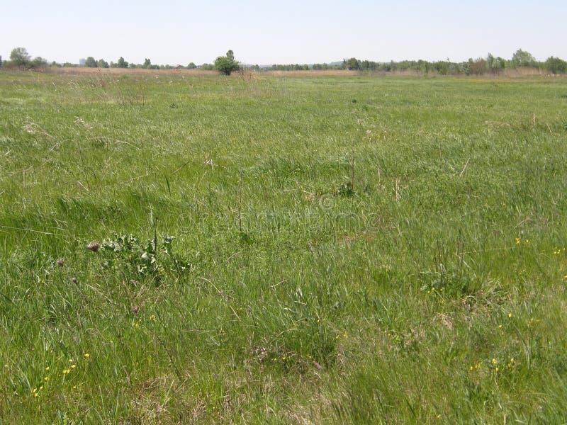 Zielona trawa na wiosny łące obrazy stock