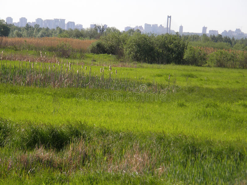 Zielona trawa na wiosny łące fotografia royalty free
