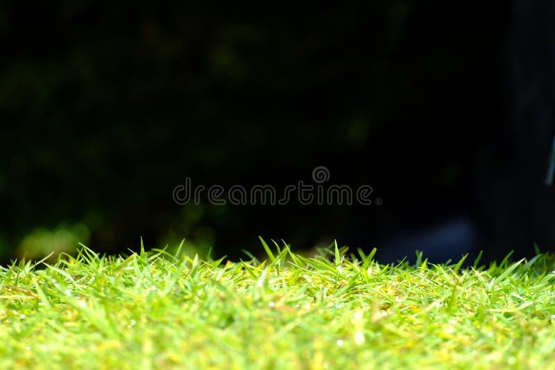 Zielona trawa odizolowywająca na czarnym tle zdjęcia stock