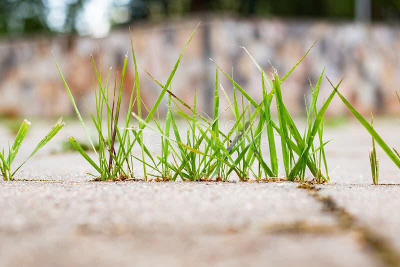 Zielona trawa r na asfaltowym zakończeniu up zdjęcia royalty free