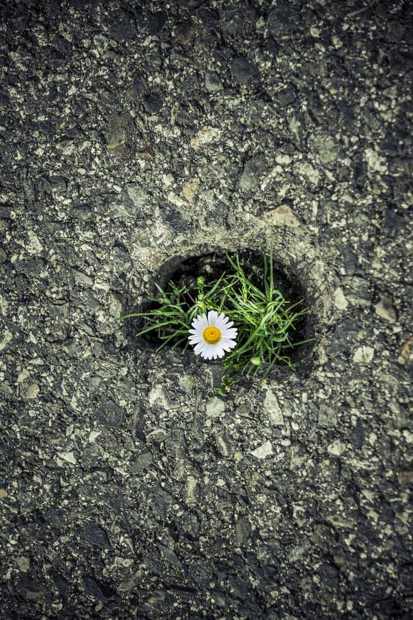 Zielona trawa roÅ›nie przez asfalt obrazy stock