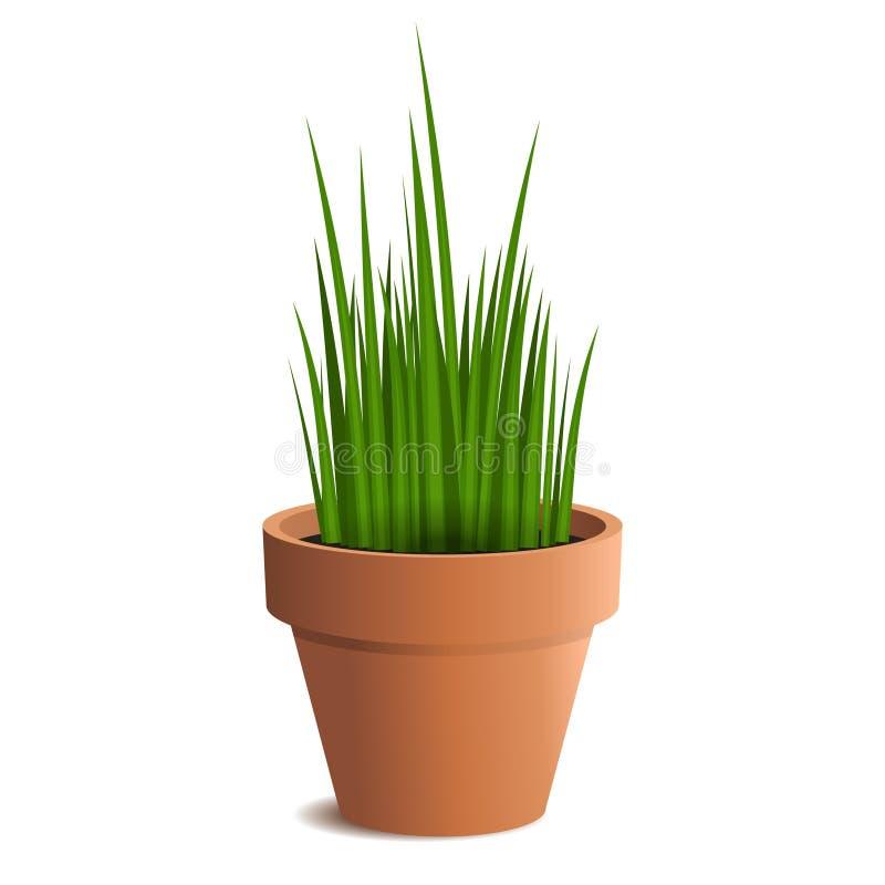 Zielona trawa w garnku odizolowywającym na białym tle ilustracja wektor