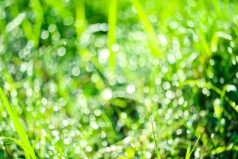 zielona trawa w ogr?dzie i plama woda opuszczamy na li?ciach w rainny sezonie obraz royalty free