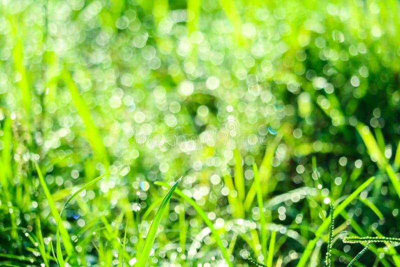 zielona trawa w ogr?dzie i plama woda opuszczamy na li?ciach w rainny sezonie fotografia royalty free