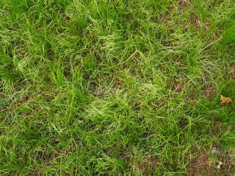 Zielona trawa w ogr?dzie obrazy stock