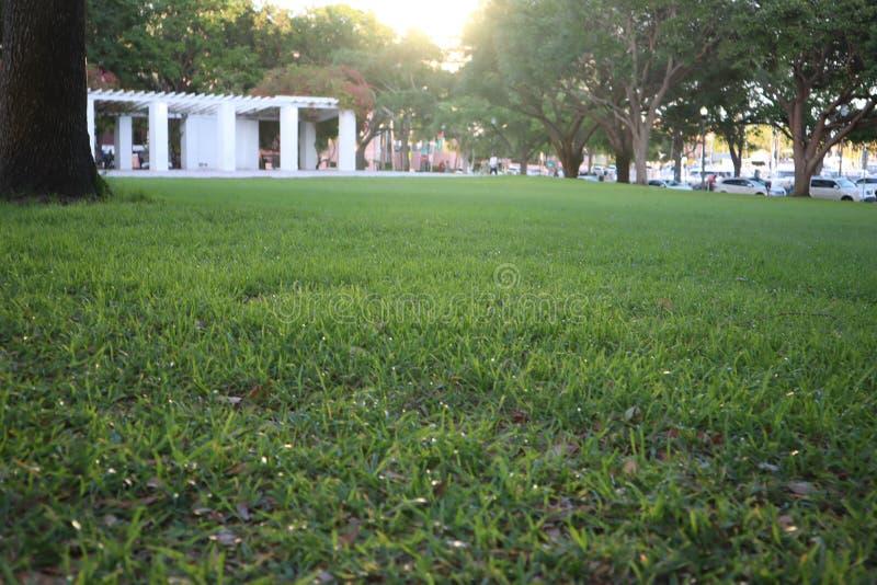 Zielona trawa w parku słońce ustawiający przeciw obraz stock