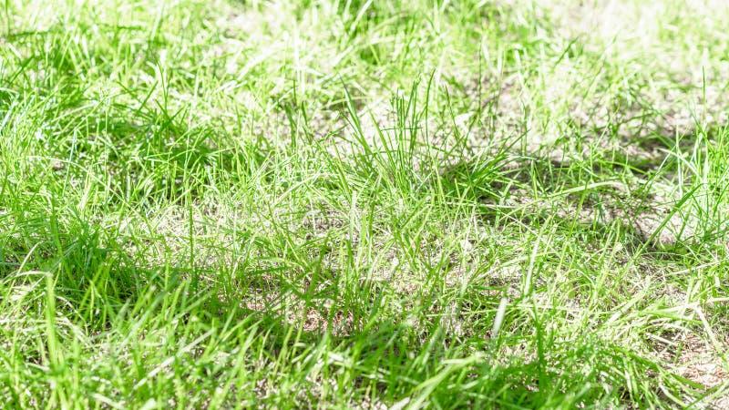 Zielona trawa ?y?owa? na jaskrawym s?onecznym dniu jako naturalny t?o obraz royalty free