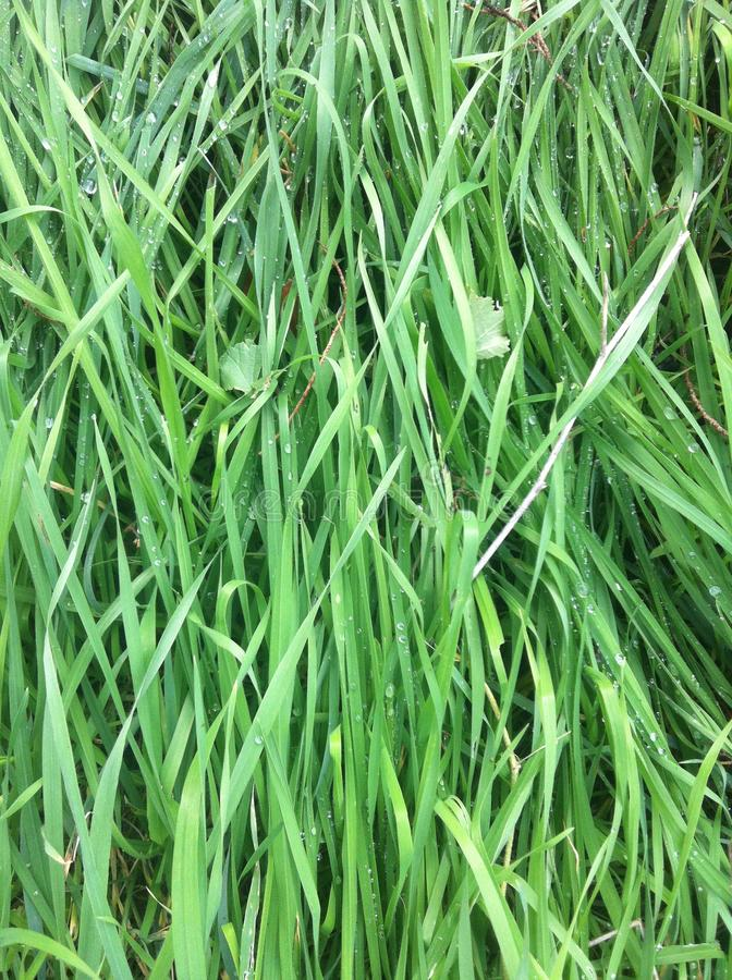 Zielona trawa z kropelkami rosa obraz stock
