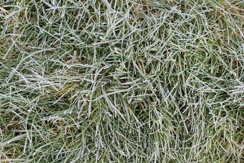 Zielona trawa z ranku słońcem i mrozem co rano Spokojna jasna pogoda Opóźniona jesień lub wczesna zima Abstrakcjonistyczny tło od fotografia royalty free