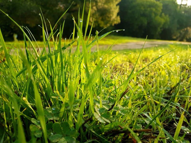 Zielona trawa z wodnymi kroplami zdjęcie stock