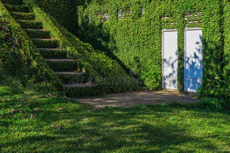 Zielona trawa zakrywał schody i ściany z białymi drzwiami obrazy royalty free