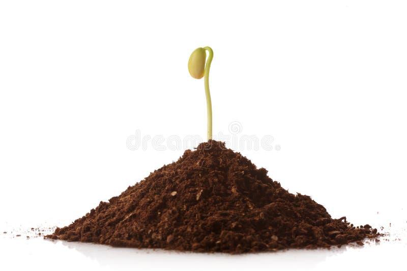 zielona uprawy roślin sterty ziemi zdjęcia stock