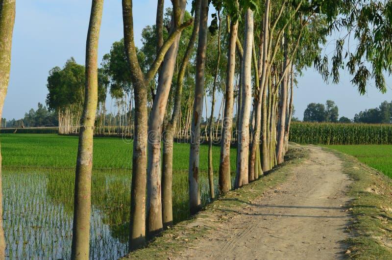 Zielona wioski droga zdjęcia stock