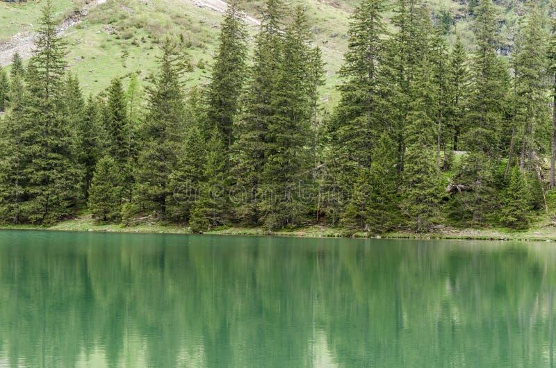 zielona woda i drzewa zdjęcia stock